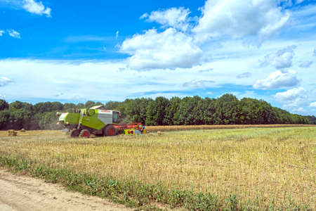 process of canola harvesting by harvesters. plants in reapers. truck unloading