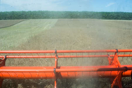 process of rape harvesting by harvesters. plants in reapers. truck unloading.