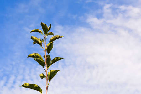young apple seedlings on a background of blue sky with clouds. Place under the inscription.