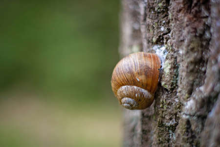 snail on the bark of a tree trunk Banco de Imagens