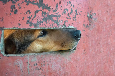 Dogs eyes in the fence of a shelter