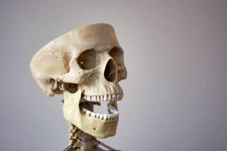Anatomically correct medical model of the human skull.