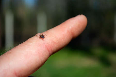 tick on human skin on the background of the forest. Stockfoto