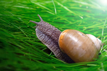 grape snail on a mushroom against a blue sky.
