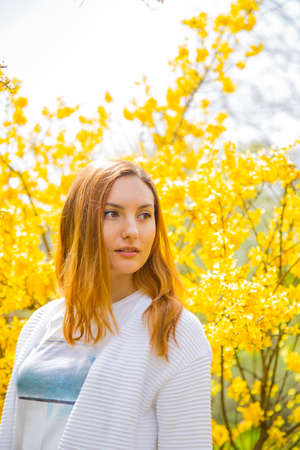Close-up portrait of beautiful red-haired young woman standing near blooming Forsythia bushes in spring garden. Stock Photo
