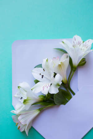 Beautiful tender bouquet of white Alstroemeria in white envelope on mint green background. Spring composition. Springtime card.
