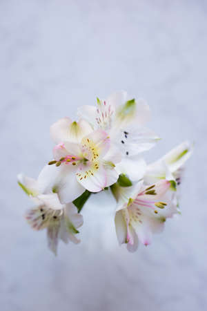 Bouquet of beautiful tender white Alstroemeria on marble background, view from above. Spring composition. Mother`s day card. Stock Photo