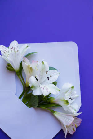 Beautiful tender bouquet of white Alstroemeria in white envelope on dark blue background. Spring composition. Springtime card.
