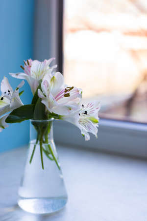 Bouquet of beautiful tender white Alstroemeria in glass vase near sunny window. Spring composition. Mother`s day card.