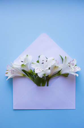 Beautiful tender bouquet of white Alstroemeria in white envelope on light blue background. Spring composition. Springtime card.