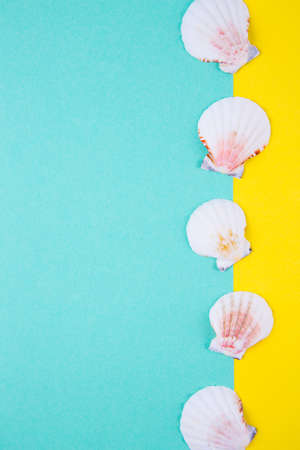 Sea scallop shells on colored mint green and yellow backgrounds with negative space. Minimalistic colorful summer background. Top view. Flat lay in marine style. Stock Photo