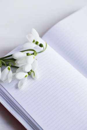 Bouquet of beautiful tender white snowdrops with open clear notebook on white background. Spring composition.