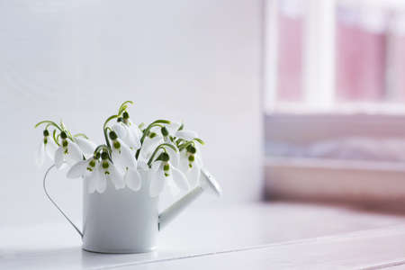 Bouquet of beautiful tender white snowdrops in watering can on light background near sunny window. Spring composition.