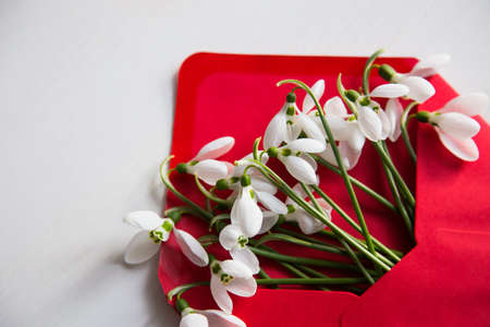 Bouquet of beautiful tender white snowdrops in red envelope on white wooden background. Spring vintage composition. Stok Fotoğraf