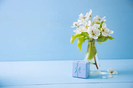Blue little gift box and bouquet of beautiful tender white flowering branches in glass vase on blue wooden background. Spring composition. Stock Photo