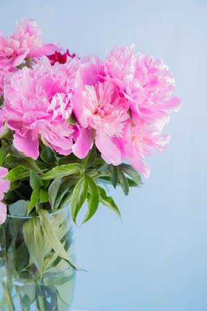 Lush bouquet of beautiful pink peonies in glass vase on blue background. Spring gift. Stock Photo