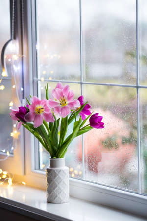 White vase with tender bouquet of beautiful pink tulips near window with raindrops in the daylight. Spring blooming flowers with garland lights on background. Stock Photo