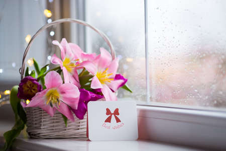 Greeting card and tender bouquet of beautiful pink tulips in white basket near window with raindrops in the daylight. Spring blooming flowers with garland lights on background.