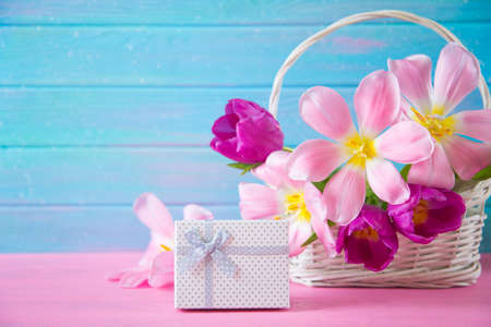 White gift box and tender bouquet of beautiful pink tulips in wicker basket on blue wooden background.