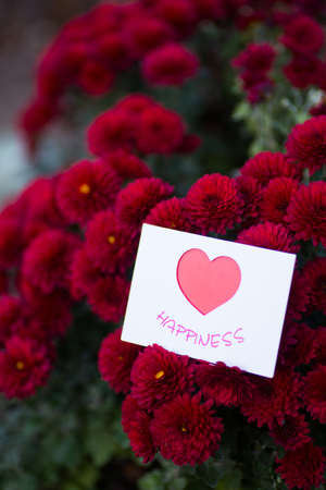 Greeting romantic card with heart surrounded by flowers of red chrysanthemum. St. Valentine day gift.