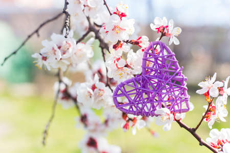 Purple wicker rattan heart surrounded by flowering branches of spring trees. Spring vibrant composition with copy space. Mother day present.