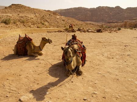 petra  jordan: Petra - Jordan