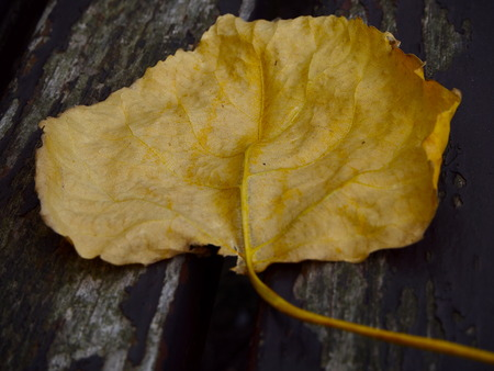 outumn: Leaf on the wood bench