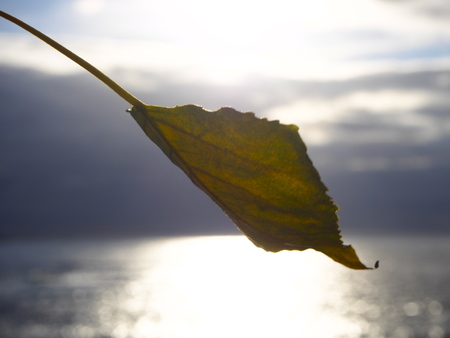outumn: Leaf with the sea behind