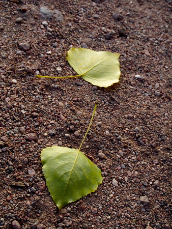 outumn: Leaves on dirt road