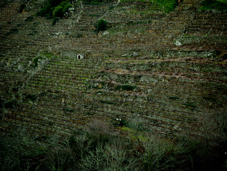 ribeira: Vineyards in the Ribeira Sacra