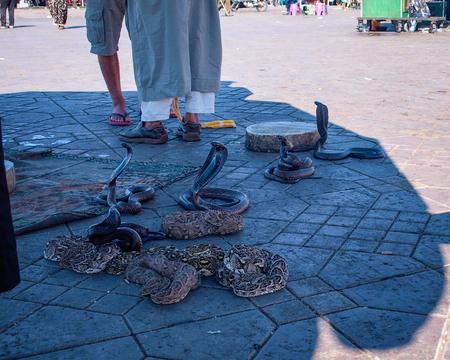 Snakes in El-Fnaa square in Marrakesh Stock Photo