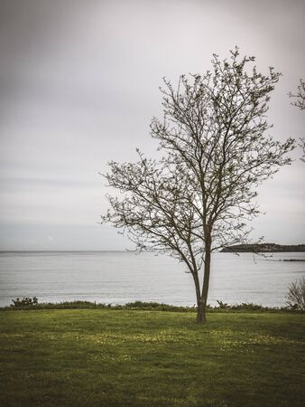 Vertical landscape of the tree by the sea