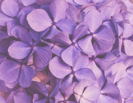Purple floral background Stockfoto