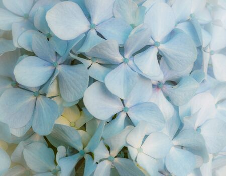 Floral blue background