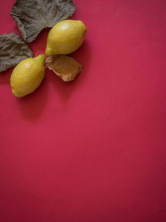 Lemon and fall leaves on red background with copy space Фото со стока