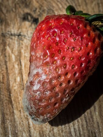 Rotten strawberry on wood background Banque d'images