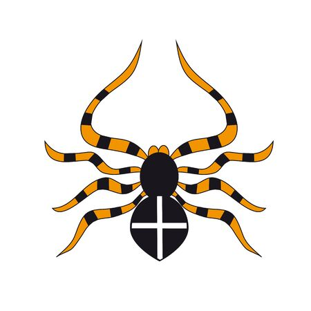 latrodectus: black dangerous spider isolated on white background.