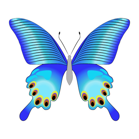 Bright beautiful decorative blue butterfly. Vector illustration isolated on white background.