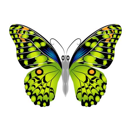 Bright beautiful green butterfly. Vector illustration isolated on white background.