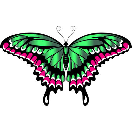 Beautiful delicate air butterfly of green color with purple ornaments.Vector graphics.