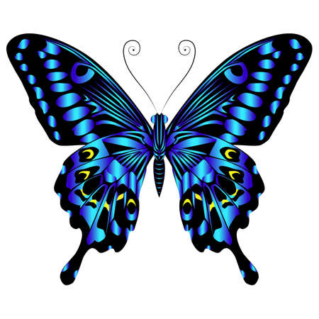 Beautiful bright blue butterfly. Vector illustration isolated.