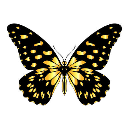 A beautiful, delicate and airy butterfly of yellow color. Vector graphics on a white background. Illustration