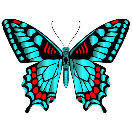 Beautiful bright green butterfly. Vector illustration isolated on white background.
