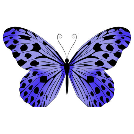 Bright beautiful purple butterfly. Vector illustration isolated on white background. Illustration