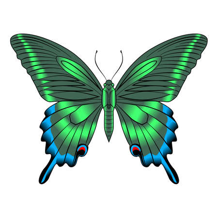 Beautiful, delicate, airy, elegant butterfly, green. Vector graphics on a white background. Illustration