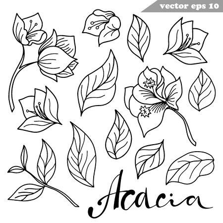 Simple vector hand drawn acacia flowers set