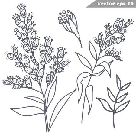 Einfache Vektor handgezeichnete Mimose Blumen Set Vektorgrafik
