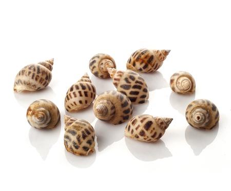 Many shells isolated on white background Stock Photo