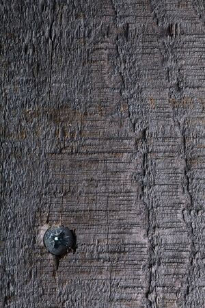 defects: Grey wood board surface texture with defects like knots and snag on it