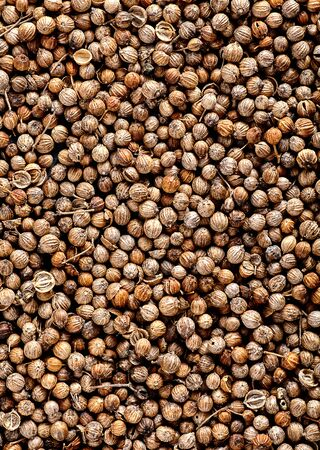 coriander seeds: Close up of Many organic dried coriander seeds Coriandrum sativum. Top view